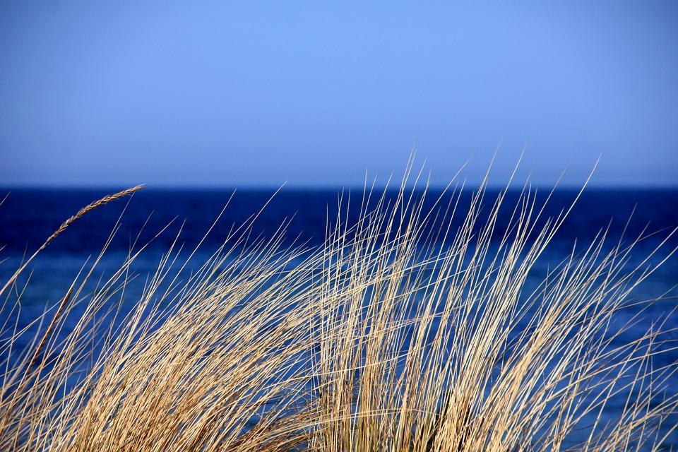 Cielo y mar azul y gramíneas de dunas