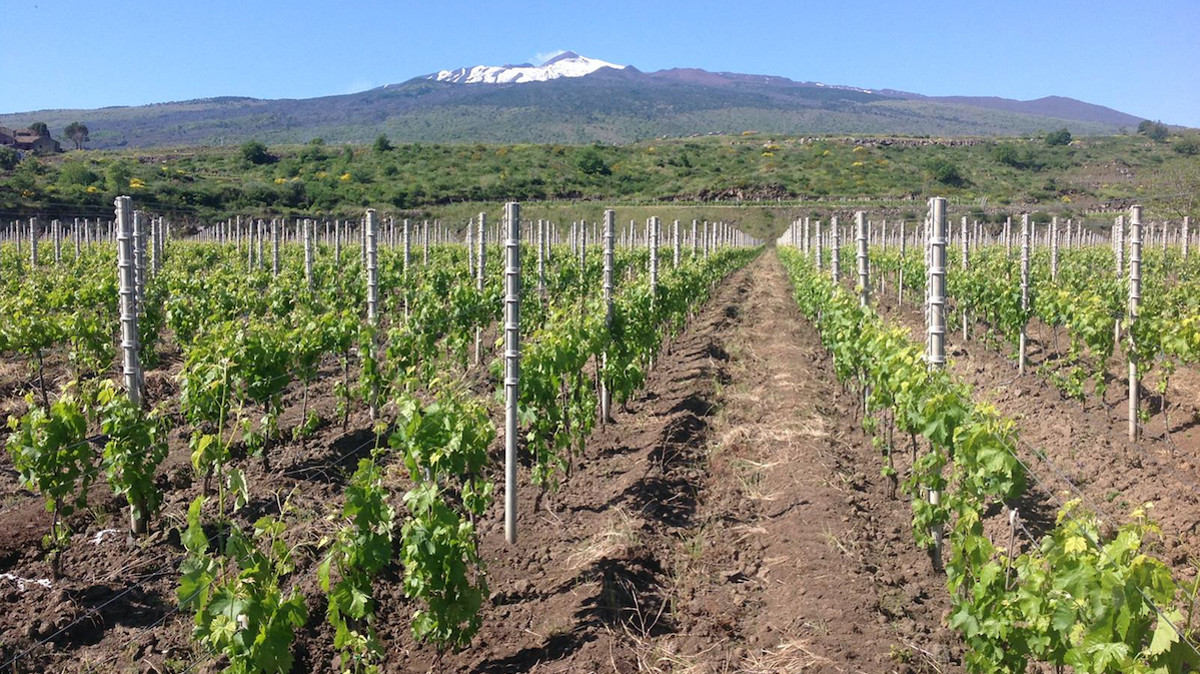 Spumante Etna Doc e la produzione in crescita