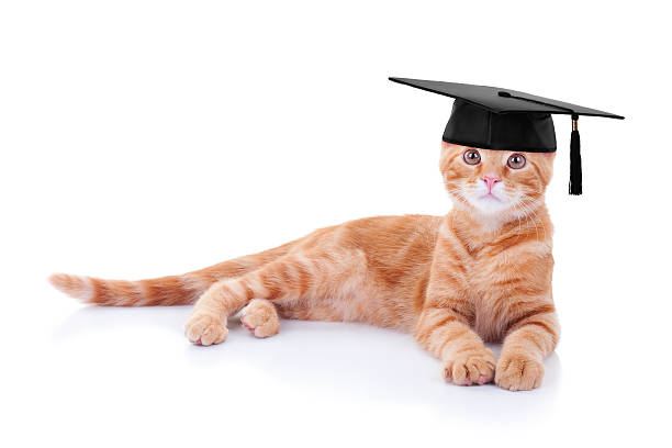 Training Your Cat - With Positive Reinforcement