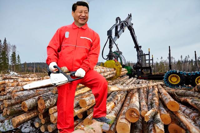 Ущерб, наносимый незаконной вырубкой лесов – масштабы по данным, предоставленным Счетной Палатой