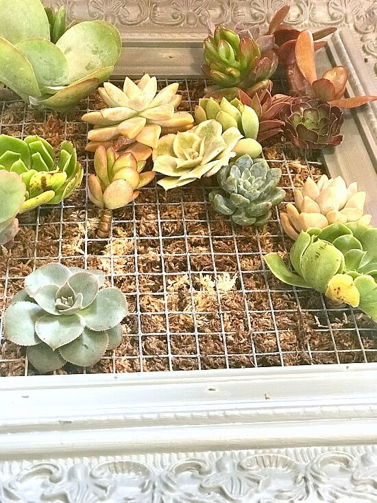 How to build a  DIY frame for succulent plantings