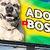 Δεν ήθελε κανείς αυτό τον σκύλο και έγινε αφίσα στους δρόμους...
