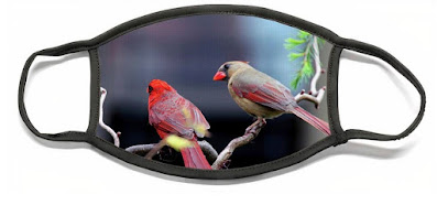 """This is a screen-shot featuring a flat view my face mask that is called """"Cardinal Love 3."""" It is available via Fine Art America. Details can be found within one of their web-pages @ https://pixels.com/featured/cardinal-love-3-patricia-youngquist.html?product=face-mask-flat"""