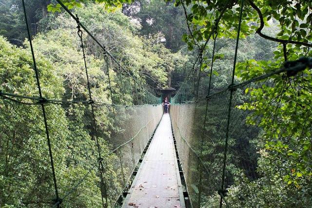 Jelajah Bodogol, Pusat Pendidikan Konservasi Alam yang Tersembunyi