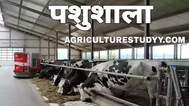 डेयरी पशुओं की आवास व्यवस्था, housing of dairy animals in hindi, पशुशाला निर्माण की कोन-कोन सी विधियां है उनके लाभ एवं हानि बताएं, भवन एवं शेड्स बताए