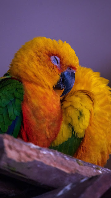 Colorful parrot wallpaper, bird, free HD