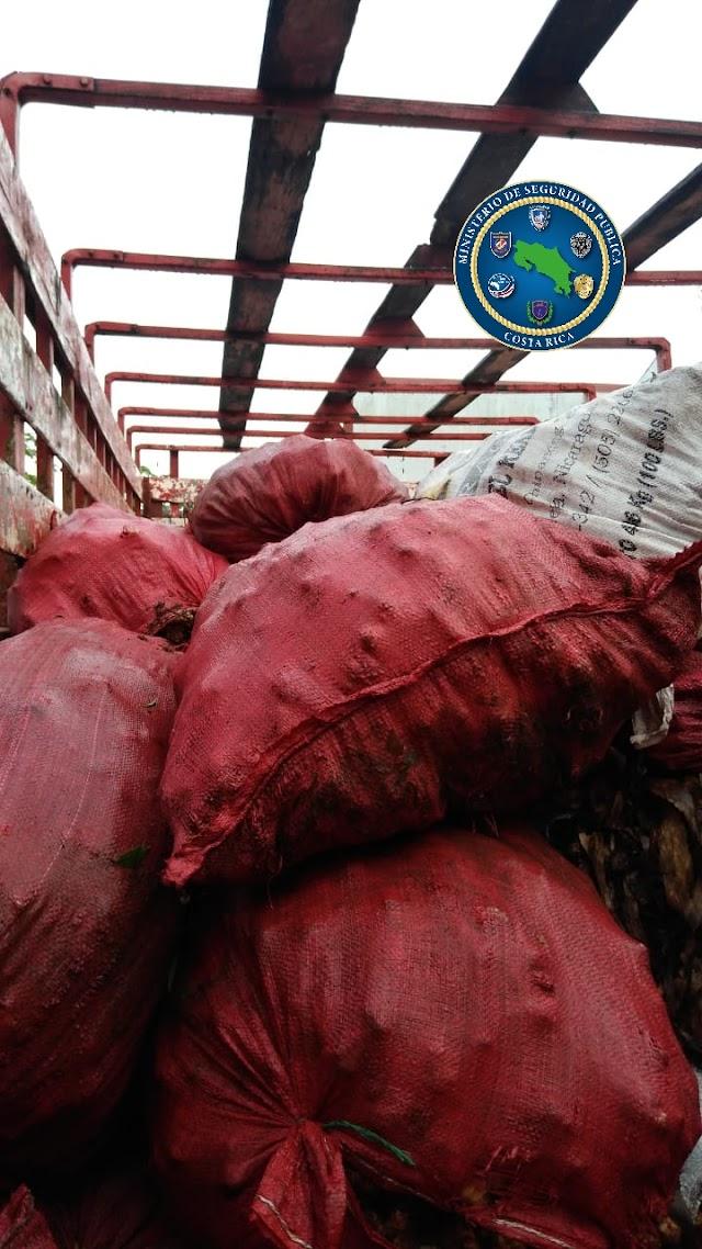 Decomisan 11 toneladas de jengibre y cebolla presuntamente contrabandeadas desde Nicaragua