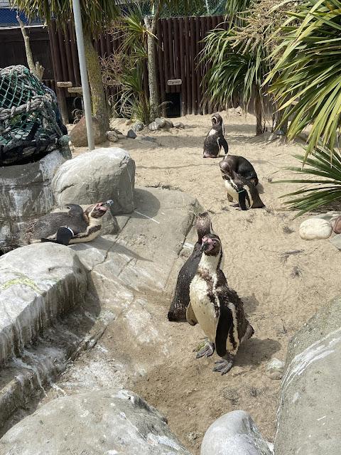 penguins at sea life weymouth