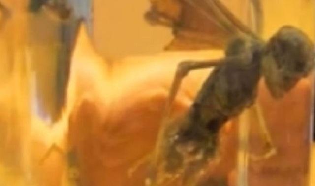 Hé lộ bằng chứng đầu tiên về người ngoài hành tinh với thi thể bí ẩn có cánh
