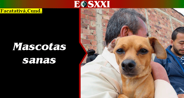 Más de 250 mascotas vacunadas en último ciclo de inmunizaciones en Facatativá del 2018