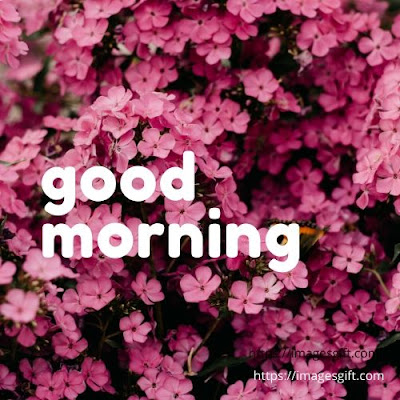 good morning images with sunday