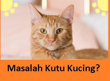 3 tips elak kutu kucing membiak di kediaman