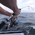 Απίστευτο. Δείτε σε βίντεο το ψάρι... να ψαρεύει ένα ψαρά. Να, που συμβαίνει και αυτό...