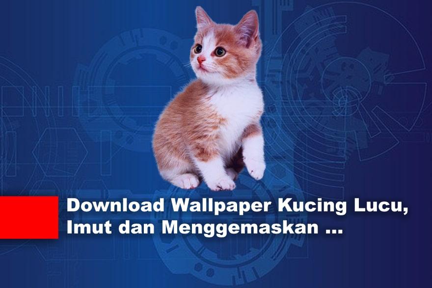 Download Wallpaper Kucing Lucu, Imut dan Menggemaskan