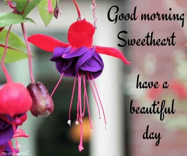 good morning have a beautiful day sweetheart