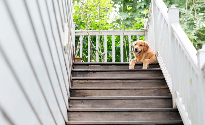 Make Your Home Comfortable for a Pet with Mobility Issues