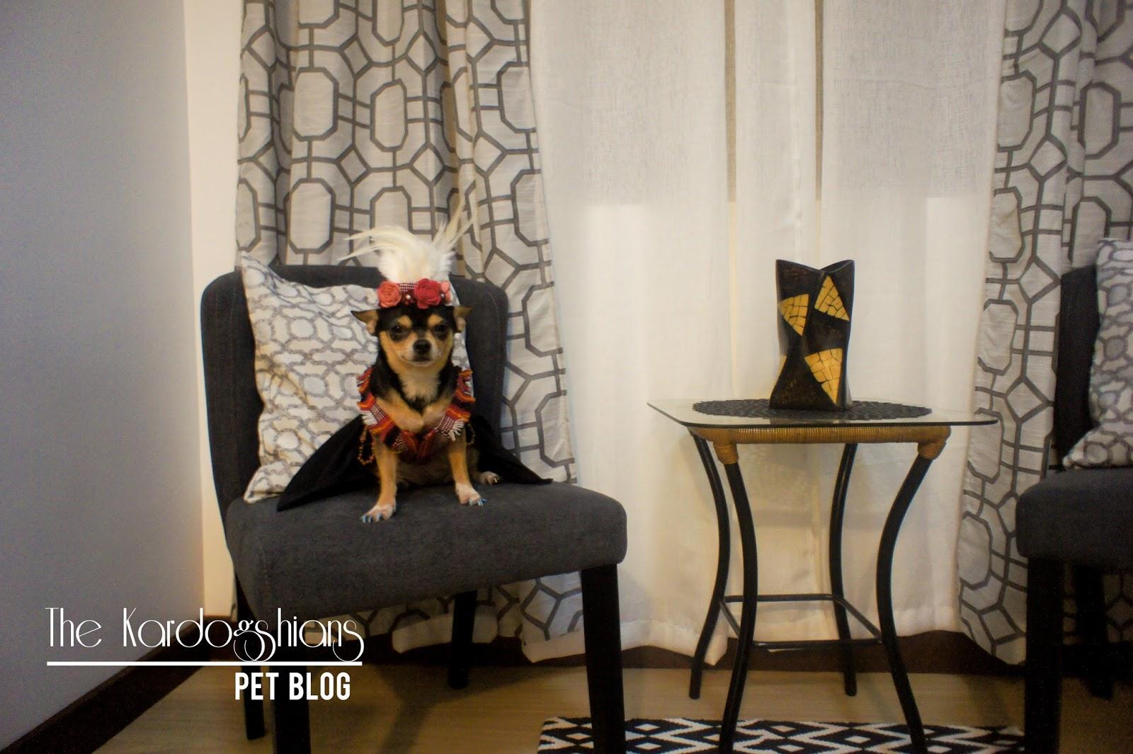 Pet Friendly Airbnb Suite on Baguio City - Kardogshians Pet Blog