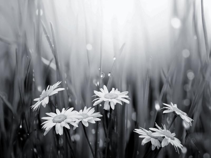Mẹo tạo những bức ảnh đen trắng ấn tượng