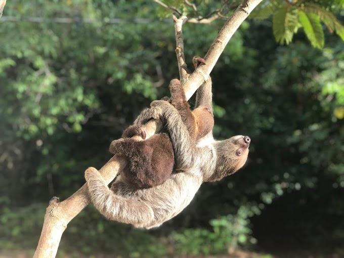 Estratégia adaptativa que permite sobrevivência na floresta
