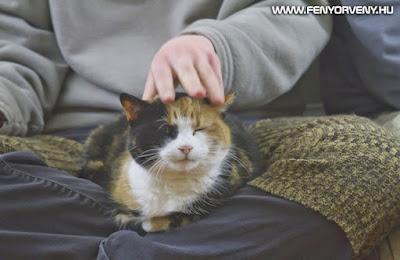 A macskák gyógyító ereje