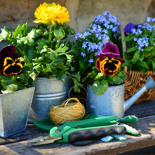 How To Grow A Flower Garden