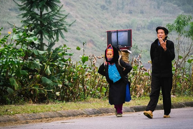 Contemplate the idyllic life in Ha Giang during the ripe rice season