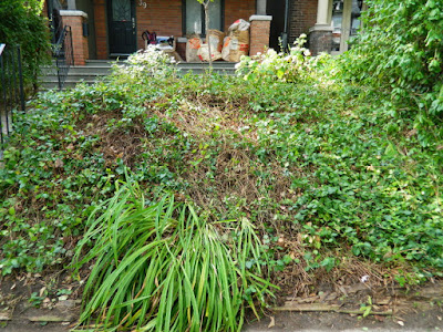 Toronto Leslieville Summer Front Yard Garden Cleanup After by Paul Jung Gardening Services--a Toronto Organic Gardener