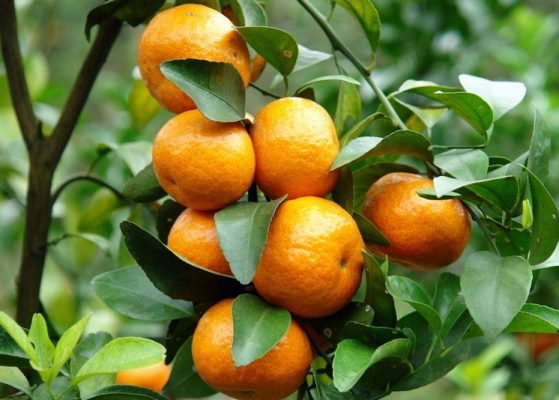 How to Start a Business of Orange Farming Business Idea