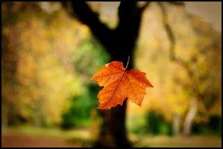 Imagem ilustrando uma folha caindo da árvore