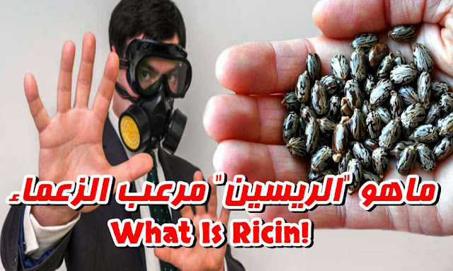 Tunisia: Ricin is a popular choice for attempting to poison politicians