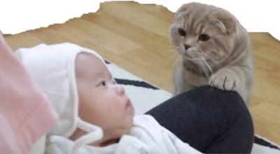 Bagaimana orang tua merawat bayi dan hewan peliharaan dalam satu rumah