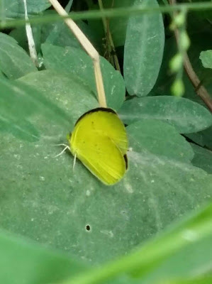 butterfly-sitting-on-the-green-leaf-of-plant