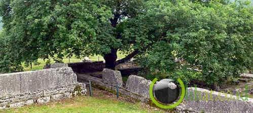 The Whispering Oak Of Dodona (pohon berisik dari Dodona)