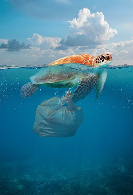 How does Plastic harm the Environment