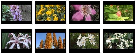 Una tercera parte de Vídeos de flores y plantas con flores III