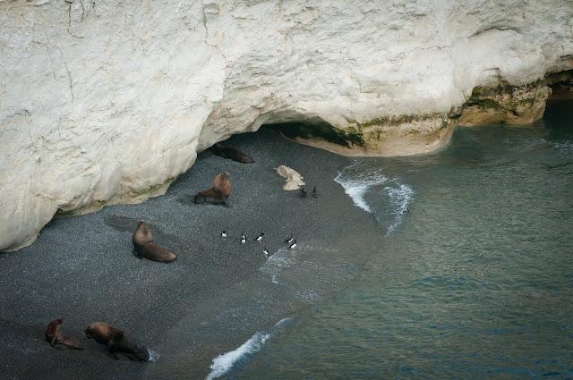 Sea lions, Punta Loma, Argentina