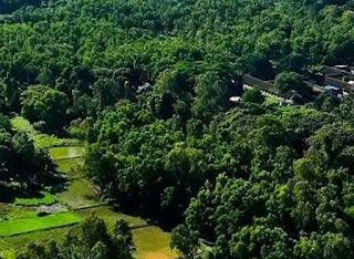 आरे जंगल में पेड़ों की कटाई के विरोध में उतरा बॉलीवुड जाने, क्या है अरेरा जंगल...?
