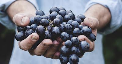 vin vegan vegetalien oenologie degustation blog beaux-vins