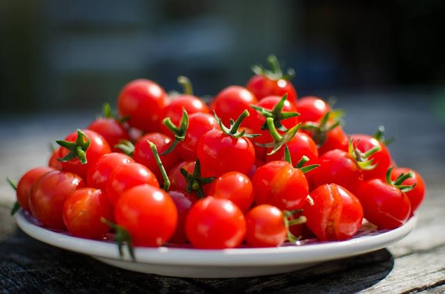 كيف تزرع الطماطم؟  زراعة الطماطم، زراعة الطماطم من البذور، زراعة الطماطم في البيت، زراعة الطماطم فى المنزل، زراعة الطماطم بالمنزل، زراعة الطماطم في الصيف، زراعة الطماطم في البيوت البلاستيكية ، زراعة البندورة، زراعة البندورة في المنزل، زراعة البندورة من البذور، زراعة البندورة الكرزية، زراعة البندورة في البيوت البلاستيكية، زراعة البندورة البعلية