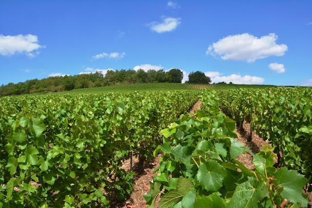 La route du champagne en fête, cote des bar, troyes, champagne, champagnefeest, Vallée de l'Arce-en-Seine, l'Aube, champagne Régis Barbe, champagne Remy Massin, champagne Philippe Thévenin, champagne Chassenay D'Arce, champagne François Brossolette, champagne R. Dumont, renoir essoyes, champagne Beaugrand in Montgueux,