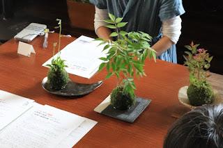 作った苔玉を前に生徒の皆さまが育て方の説明を聞いている様子