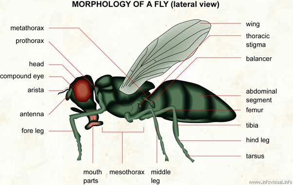 Apa Nak Buat Kalau Jumpa Lalat Dalam Minuman atau Makanan?