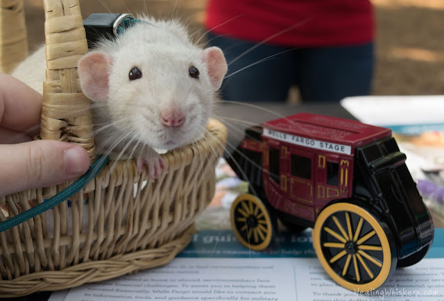 Oliver with a tiny wells fargo wagon