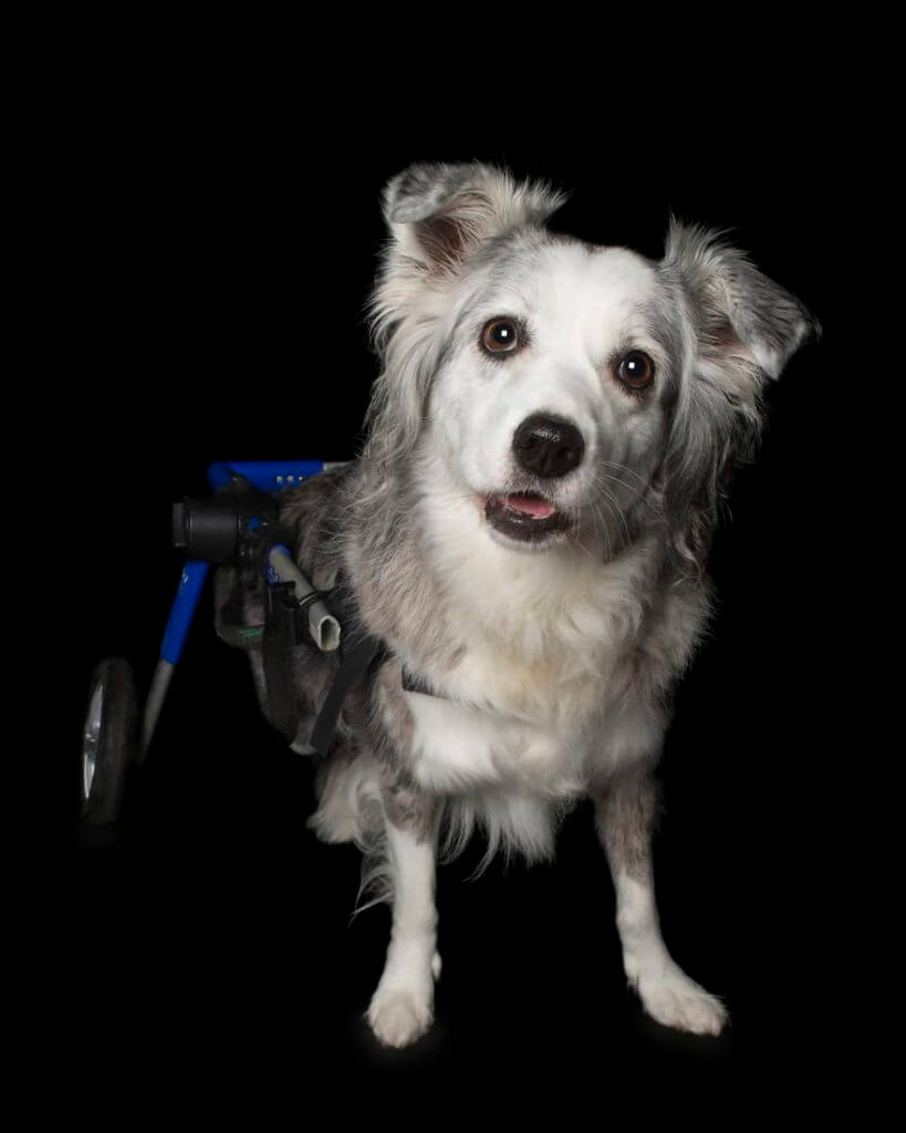 Photographer Captures Powerful Portraits of 'Perfectly Imperfect' Disabled Dogs