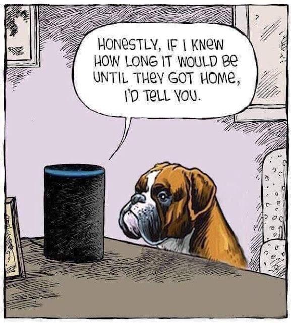 Poor Pupper!!