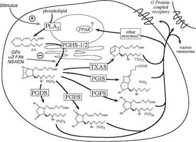 Diagram illustrating cell signaling pathways involving prostanoids
