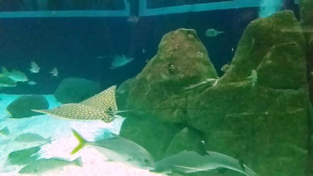 AquaRio - Todas as dicas para visitar o maior aquário da América do Sul