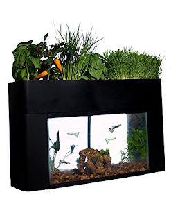 Aquaponics setups make a great gift.