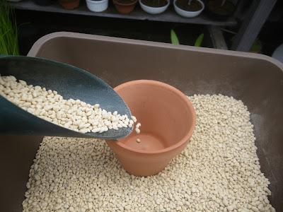 素焼きの鉢