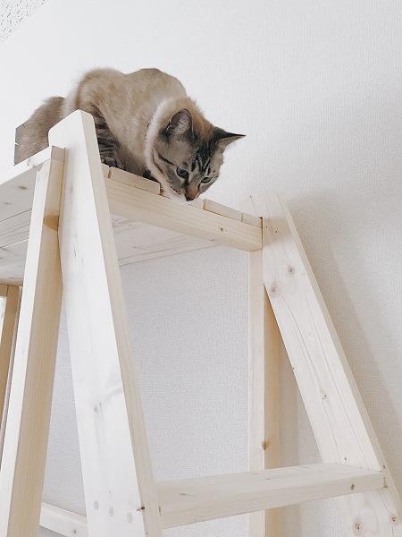屋上からはしごを見下ろす猫